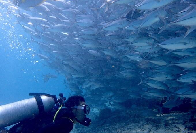 シパダン島のギンガメアジの群れ1