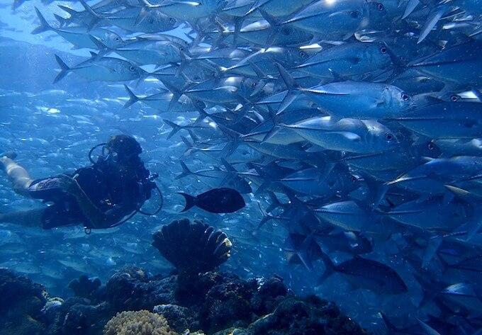 シパダン島のギンガメアジの群れ2