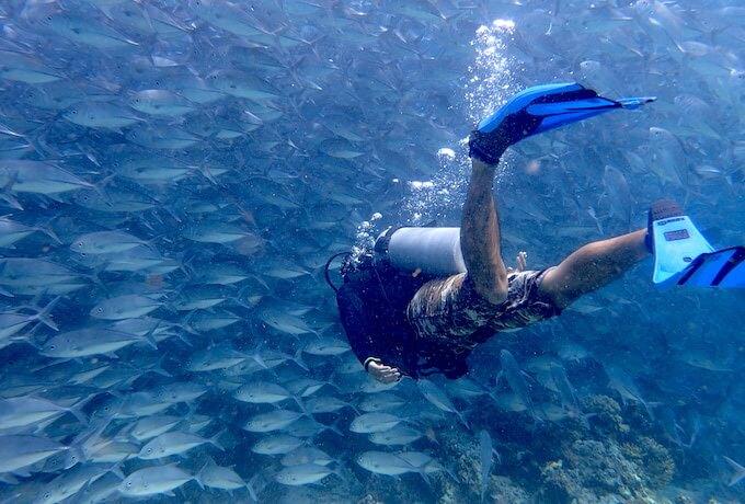 シパダン島のギンガメアジの群れ5