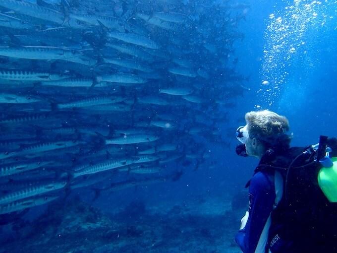 シパダン島のダイビング:バラクーダトルネード2