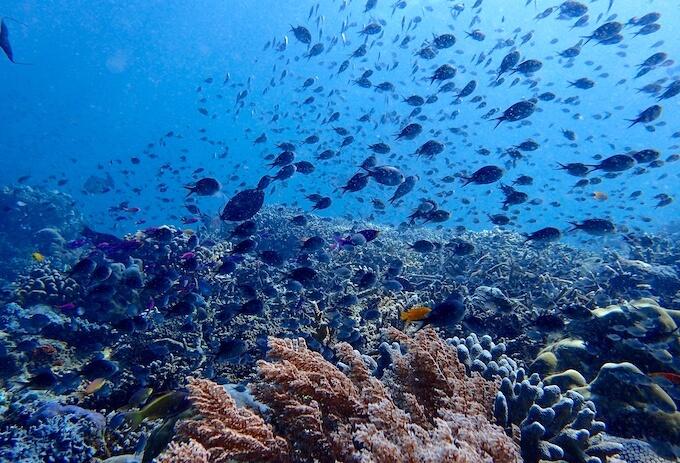 シパダン島の魚影1