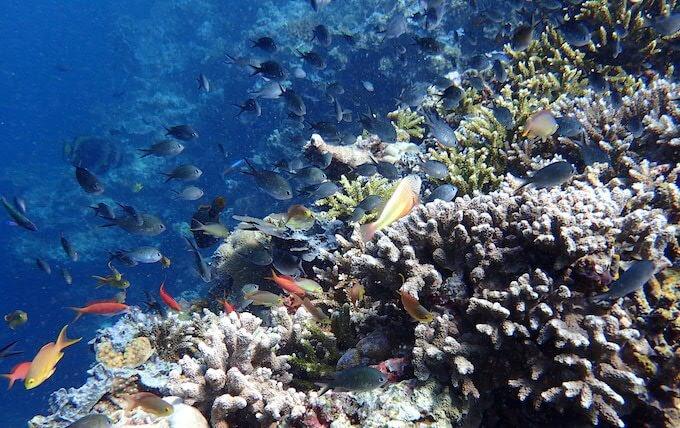 シパダン島14