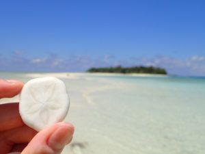 マタキング島のビーチに落ちていたウニの骨