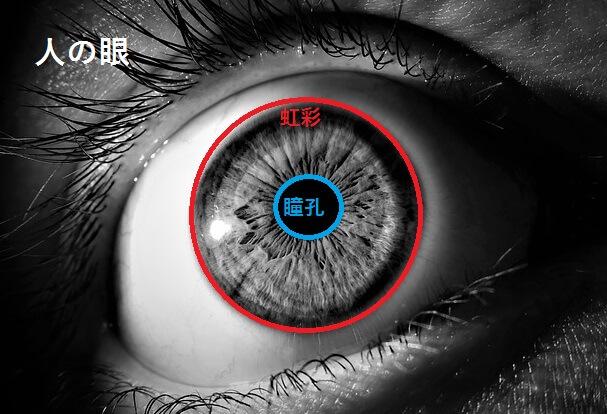 人の眼のつくり、珍しい目の色について(1)