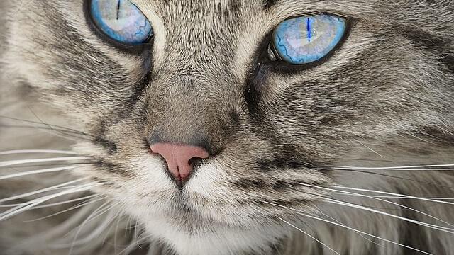 不思議な色の目の猫