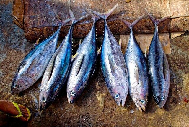 旬の魚(6匹のマグロ)