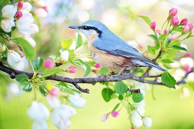 春の鳥(ウグイス)