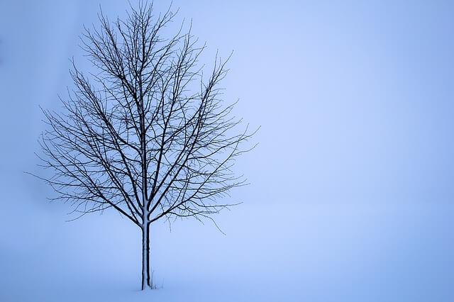 雪景色(雪の中の樹)