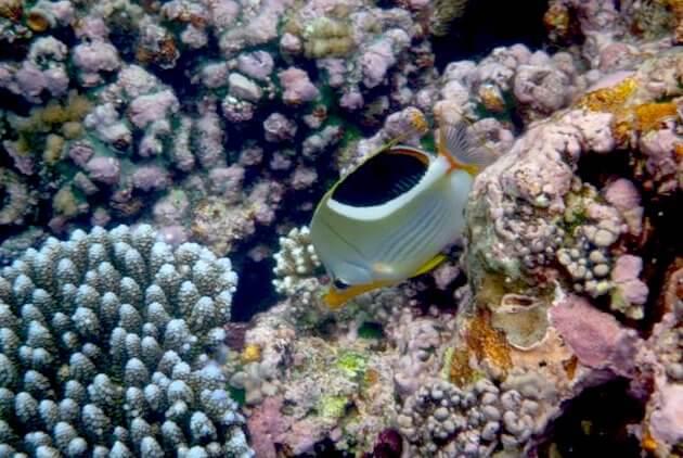 パラオのサンゴと魚3