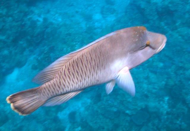 パラオのサンゴと魚8