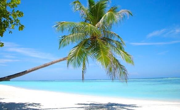 モルディブのビーチとヤシのき