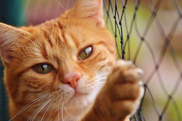 猫目(子猫)
