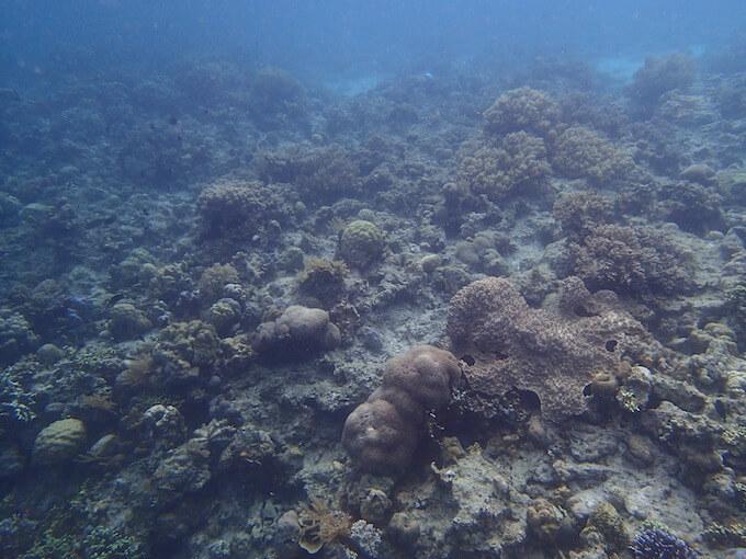 あまり状態の良くない珊瑚1