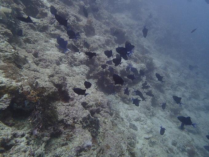 白化した珊瑚礁と魚